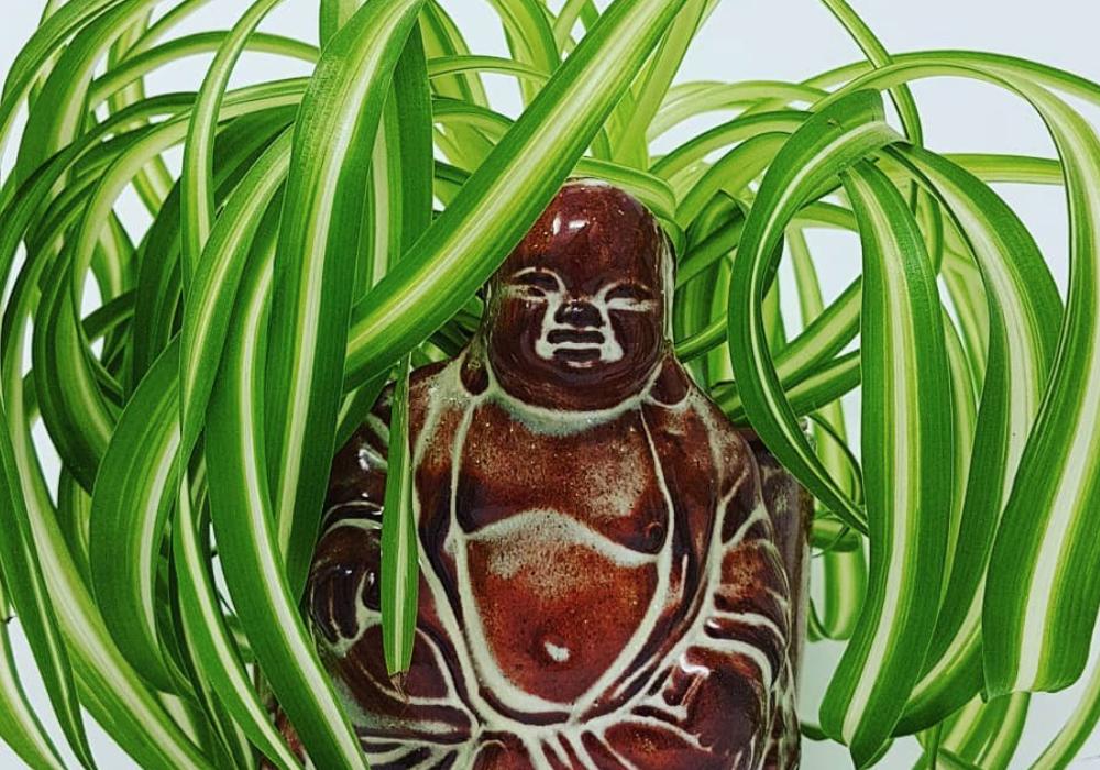 Buddha plant pot